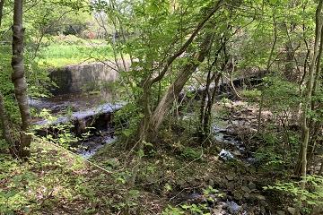 希望が丘公園 森と水の道