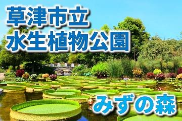 草津市立水生植物公園 みずの森
