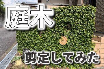庭木 剪定 植栽